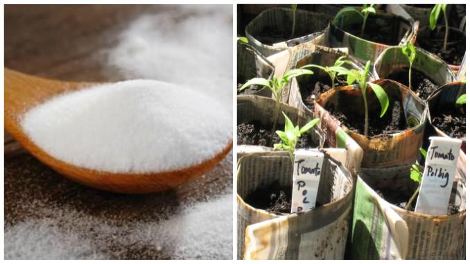 Bicarbonatul de sodiu, folosit în grădină